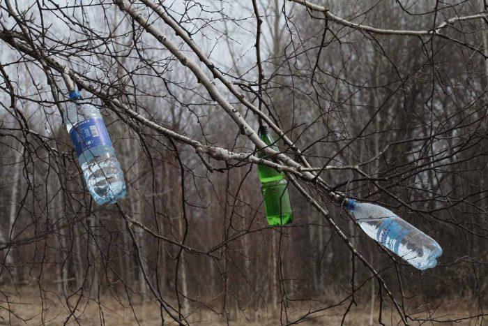 Чтобы безопасно для дерева собрать березовый сок, можно обрезать низко растущую ветку дерева и для стекания сока закрепить на ней бутылку