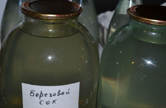 Можно самостоятельно законсервировать березовый сок