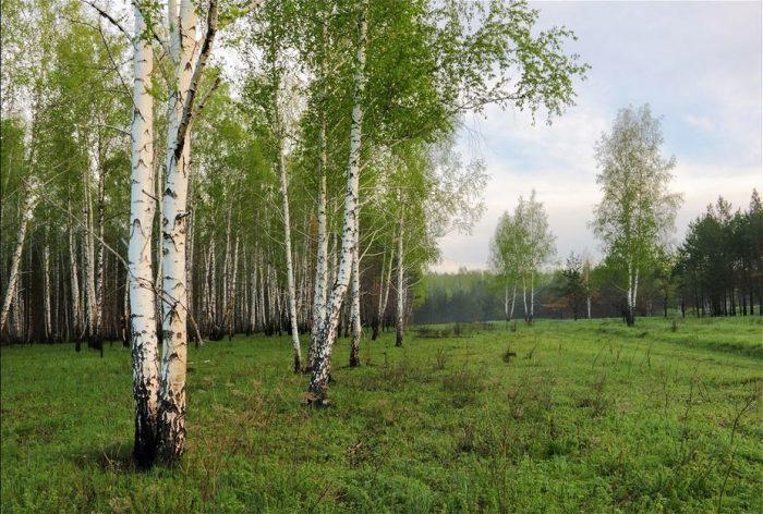 Не стоит тревожить дерево, которое болеет или травмировано