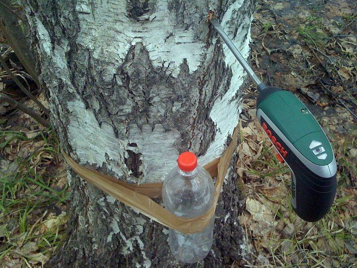 Запрещено делать много дыр в дереве, поскольку это его убьет