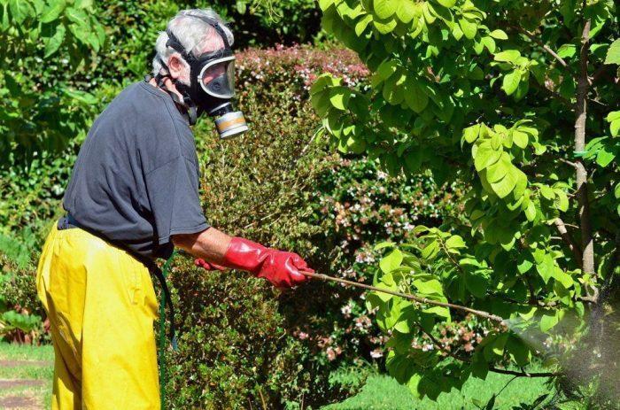 Многие садоводы подтверждают эффективность специальных химических средств