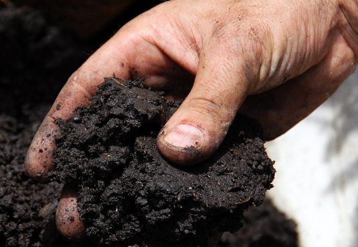 Мошки быстро появляются, если почва слишком влажная