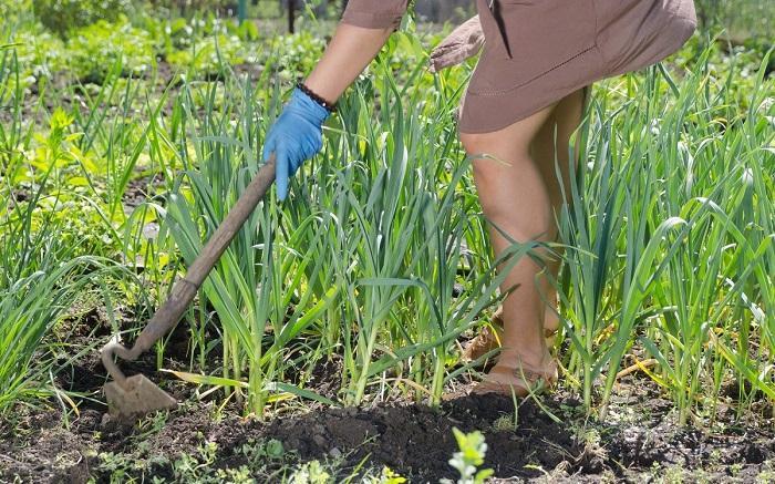Тяпка - помощник в борьбе с сорняками