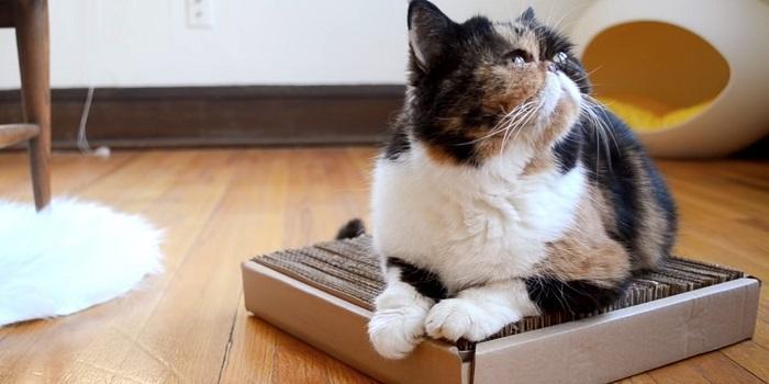 Не каждая когтеточка подойдет для вашей кошки