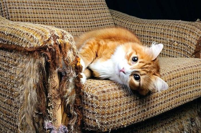 Без когтеточки пострадает ваша мебель