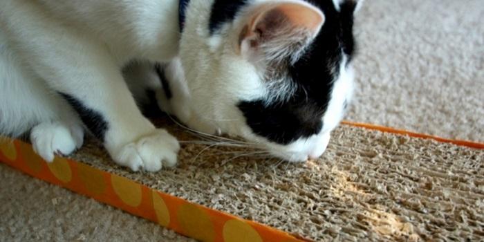 Простая когтеточка для кошек, сделанная из картона