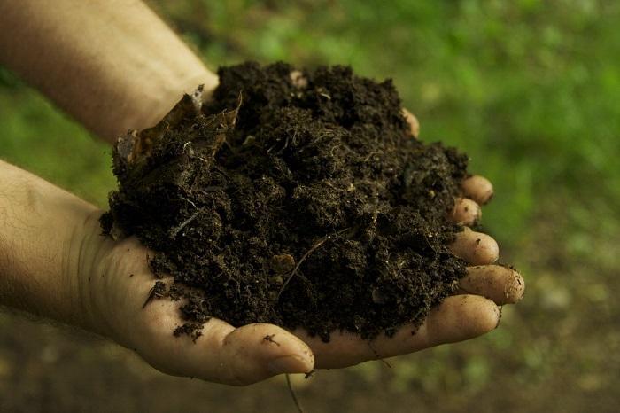 Важно постоянно следить за влажностью почвы и не допускать ее засыхания