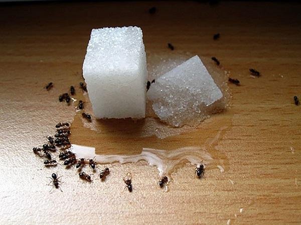 как избавиться от домашних насекомых2